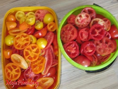 pomidory_zbiory_w_wiadrze6