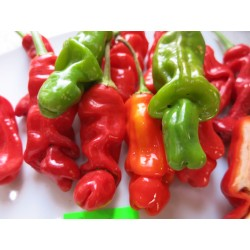 PAPRYKA PENIS PEPPER RED