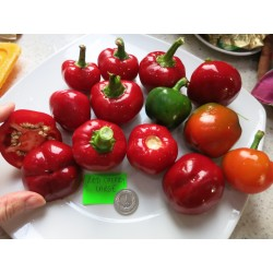 PAPRYKA RED CHERRY LARGE...