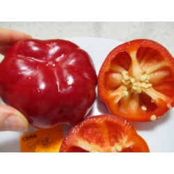 PAPRYKA SUPER RED PIMENTO