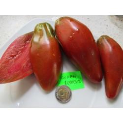 Pomidor CUBAN PEPPER