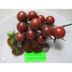 Pomidor SLADKAYA SCHOKOLADKA