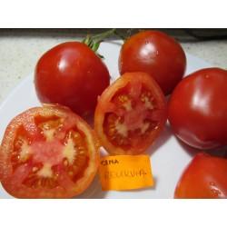 Pomidor RIELIKWIJA IZ...