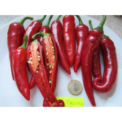 PAPRYKA DEL PIQUILLO HOT